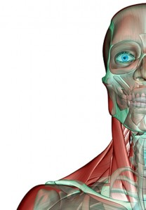 Neck Muscles exercise looking at women